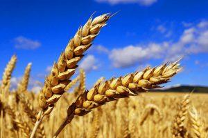 การเกษตร